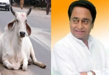 Kamal-Nath-made-a-big-statement-in-the-country-about-the-politics-of-cow