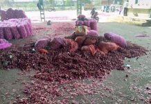 onion-rate-is-50-paise-per-kg-farmer-throw-it-outside-of-market-in-neemuch