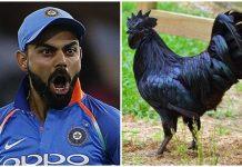 BCCI-adviced-to-indian-team-and-kohli-for-eating-jhabua-kadaknath