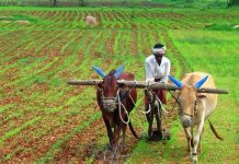 big-relief-to-farmers--Increase-in-model-prices-of-major-crops-