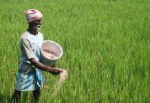 madhya-pradesh-farmer's-get-beneficiaries-of-Modi-govt's-announcement--