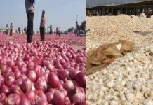Onions-garlic-prices-down-in-malwa-madhya-pradesh-farmers-in-panic-