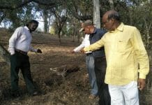 dog-attack-on-deer-after-information-not-come-team-of-the-Forest-Department-