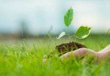 why-environment-day-on-5-june-