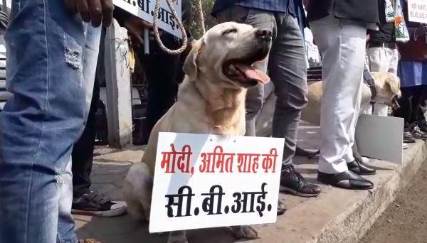 NCP's-unique-protest-in-bhopal-against-cbi-and-modi-government