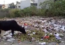 Gwalior-slipped-in-cleanliness-responsible-blaming-whole-year-not-showing-interest