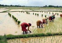 low-rain-in-madhya-pradesh-in-next-24-hours