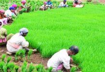 politics-on-farmers-in-madhya-pradesh-