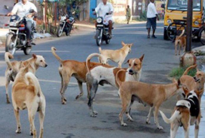 -Terror-of-stray-dogs