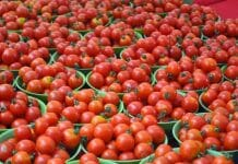 Jhabua-farmers-make-big-decisions-after-the-Pulwama-attack-Tomato-refused-to-send-to-Pakistan
