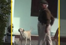 Morena-collector-doggy-get-special-security