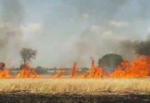 jabalpur-news-fire-in-crops-
