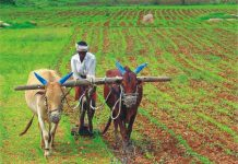 -Government-of-India-will-survey-the-farmers-of-Madhya-Pradesh