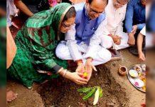 kamalnath-government-will-investigate-Plantation-around-narmada-river-in-mp