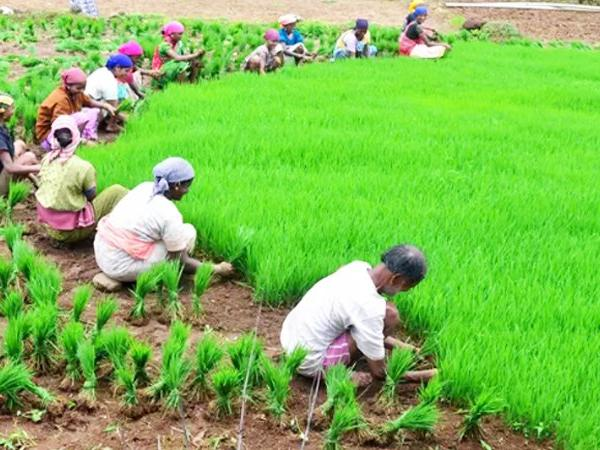 government-approved-fund-for-hails-affected-farmers--