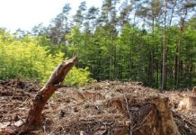 Government-in-preparation-for-lease-of-forest-land