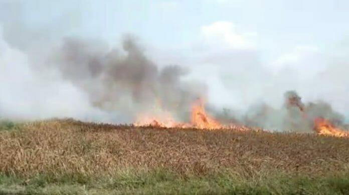 Over-35-fields-fire-destroy-wheat-crop