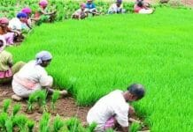 Farmers-of-15-nationalized-banks-will-also-be-liable-for-debt