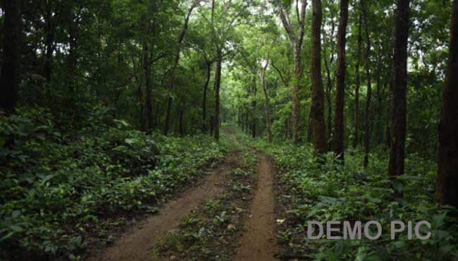 forest-area-of-khandwa-become---controversy-is-being-exposed