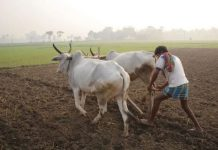 scam-on-nam-of-farmers-in-mp