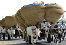 -Good-initiative--In-the-afternoon-the-restrictions-placed-on-transporting-goods-from-animals-or-riding