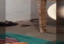 nagin-in-poling-booth-in-mandsaur-see-video-