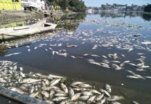 fish-died-in-pond