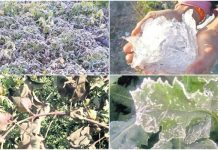 Waste-crops-in-ten-districts-of-MP