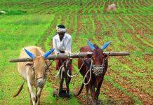किसान सम्मान निधि