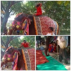 हाथी पर योग कर रहे बाबा रामदेव धड़ाम से नीचे गिरे, वीडियो वायरल