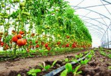 horticulture crops