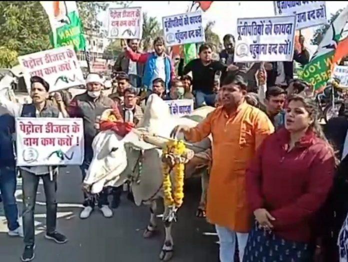पेट्रोल-डीजल की बढ़ती कीमतों का विरोध, युवा कांग्रेस ने बैलगाड़ी और ठेले पर बाइक रखकर निकाली रैली
