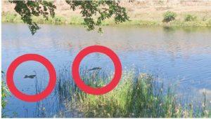रूंझ नदी बनी पन्ना की गंगा, तैरते मिले 6 से ज्यादा शव, मचा हड़कंप