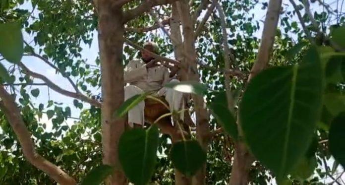 बुजुर्ग ने पीपल के पेड़ पर डाला डेरा, ये है खास वजह