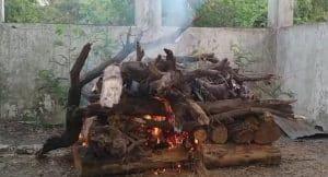 भोपाल के टाइगर की इंदौर में हुई मौत, चिड़ियाघर में पसरा मातम