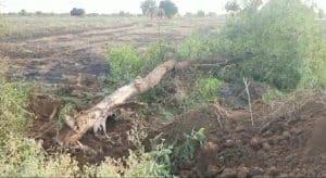 मुख्यमंत्री की योजनाओं पर पानी फेर रहे नेता अफसर, भृष्टाचार की सड़क ने ली पेड़ों की जान
