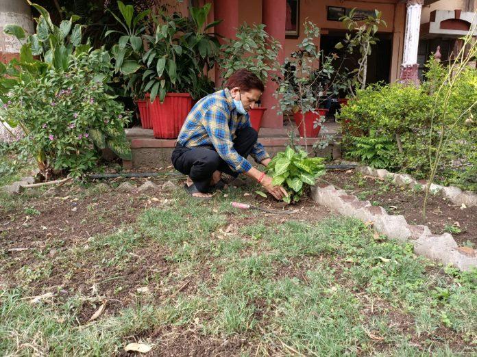 विश्व पर्यावरण दिवस पर सहज समागम फाउंडेशन संस्था द्वारा वृक्षारोपण
