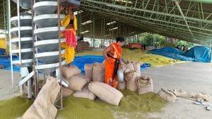 MP News: किसानों की समस्या बढ़ी, समर्थन मूल्य पर मूंग खरीदी में आई ये अड़चन