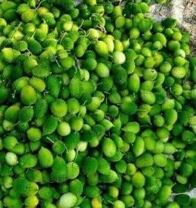 इस सब्जी को खाने से दूर होती है कई गंभीर बीमारियां, मानी जाती है बेहद पोषक!
