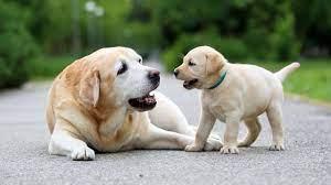 Ujjain: आदमी पर से कुत्तों का विश्वास हुआ कम, बदल गया व्यवहार