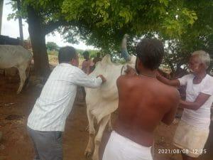Gwalior News : प्रशासन पहुंचा बाढ़ प्रभावितों के पास, लगाए स्वास्थ्य-पशु चिकित्सा शिविर