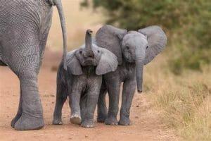 12 August World Elephant Day: क्यों मनाया जाता है विश्व हाथी दिवस ? जानिए हाथियों से जुड़ी कुछ रोचक बातें