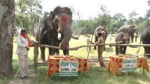 बांधवगढ़ में हाथियों का महोत्सव शुरू, सज-धज कर पिकनिक का लुफ्त उठा रहे हांथी